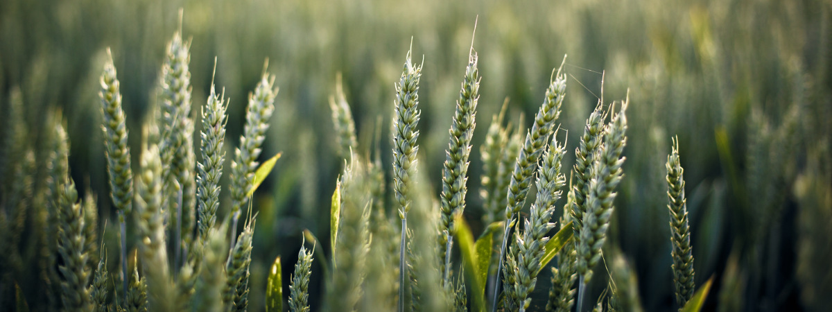 Zemědělská oblast